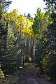 Fall colors along FR151 (6255306845).jpg