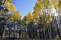 Fall colors along FR 418 (6255290981).jpg