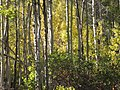 Fall colors near Ice House Resort in the Eldorado National Forest (4009758062).jpg