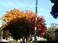 Fall in madison - panoramio.jpg