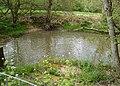 Feeder Pool, Brewhurst Mill - geograph.org.uk - 166057.jpg