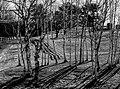 Fences (33980960186).jpg