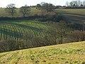 Fields below Bellingdon - geograph.org.uk - 1081219.jpg