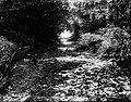 File-C4260-C4271--Unknown location--Flood damage -1917.09.13- (df3d08ea-b2d3-4cce-b05d-a98c31895466).jpg