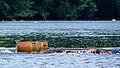 Fish Weir Passaic River 20070801-jag9889.jpg