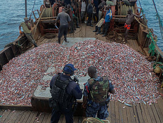Illegal fishing in Africa Impacts of illegal fishing in Africa.