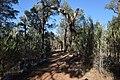 Flinders Ranges SA 5434, Australia - panoramio (115).jpg