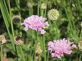 Flores en el Jardín Botánico de Viña del Mar 14.JPG
