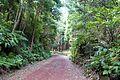 Floresta da ilha Terceira, mistura entre a Laurisilva e as plantas introduzidas, Açores, Portugal.jpg