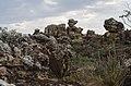 Floresta de Pedras.jpg
