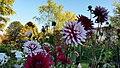 Flower (22124192601).jpg