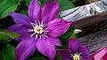 Flower (36054794946).jpg