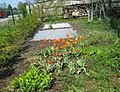 Flower and vegetable garden.jpg