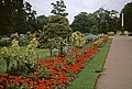 Flowerbed, Jephson Gardens, Royal Leamington Spa, Warwickshire taken 1964 - geograph.org.uk - 779264.jpg