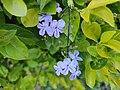 Flowers in my garden 002.jpg