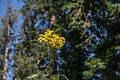 Flowers of Hills.jpg