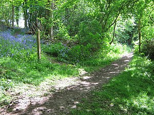 English: Footpath junction on bridleway in Div...