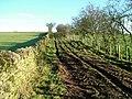 Footpath near Milburn - geograph.org.uk - 1605417.jpg