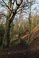 Footpath through the wood on the western slopes of Kinver Edge - geograph.org.uk - 331123.jpg