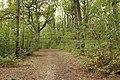 Forêt Départementale de Méridon à Chevreuse le 29 septembre 2017 - 33.jpg