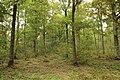 Forêt Départementale de Méridon à Chevreuse le 29 septembre 2017 - 55.jpg
