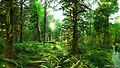 Forest (9449409835).jpg