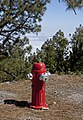 Forest Fire Hydrant (5487418790).jpg