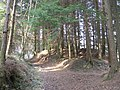 Forest Footpath - geograph.org.uk - 376977.jpg