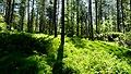 Forest Sunlight (7351988636).jpg