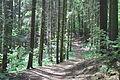 Forest Way.JPG