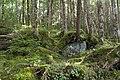 Forest in Yatsugatake 42.jpg