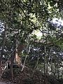 Forest of Sumiyoshi Shrine 7.jpg