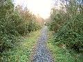 Forest path in Mynydd Mawr Woodland Park - geograph.org.uk - 69245.jpg