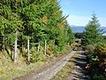 Forest road - geograph.org.uk - 578067.jpg