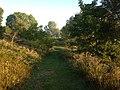 Forest trail - Fanshawe (20907537554).jpg