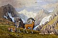 Four chamois (?) in the mountains. Watercolour Wellcome V0050686.jpg