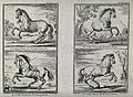 Four different forms of galloping demonstrated by a horse wi Wellcome V0021792.jpg