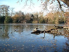 Frosty lake, Epping Forest - geograph.org.uk - 92350.jpg