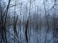 Frozen Teufelsbruch swamp next to crossing path 2.jpg