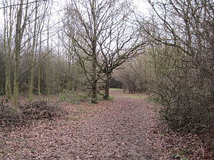 Fryent Country Park - Image: Fryent Country Park wood