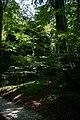 Fußweg Felsengarten Sanspareil 04082019 001.jpg