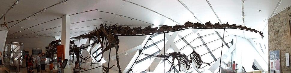 Full Barosaurus, Royal Ontario Museum