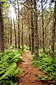Fundy National Park (7617879734).jpg