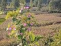 Funing, Qinhuangdao, Hebei, China - panoramio (6).jpg