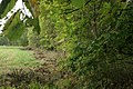 Garden-abandoned-20-years-1.jpg