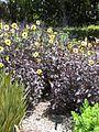 Gardenology.org-IMG 0014 rbgm10dec.jpg