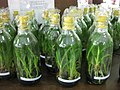 Gardenology.org-IMG 7389 qsbg11mar.jpg