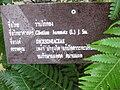Gardenology.org-IMG 7870 qsbg11mar.jpg