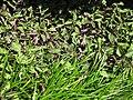 Gardenology.org-IMG 9526 rbgm10dec.jpg