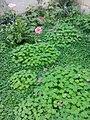 Gardens in Baghdad 31.jpg